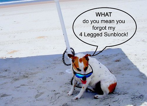 4 Legged Sunblock - Don't Forget My Sunblock!