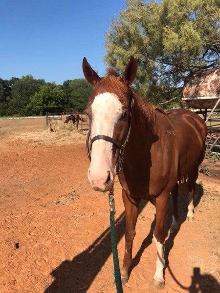 '4 Legged Sunblock' Use = Happy Horses Protected from Sunburn
