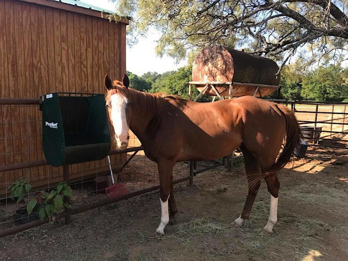 Happy Horse Using '4 Legged Sunblock' to Prevent Equine Sunburns