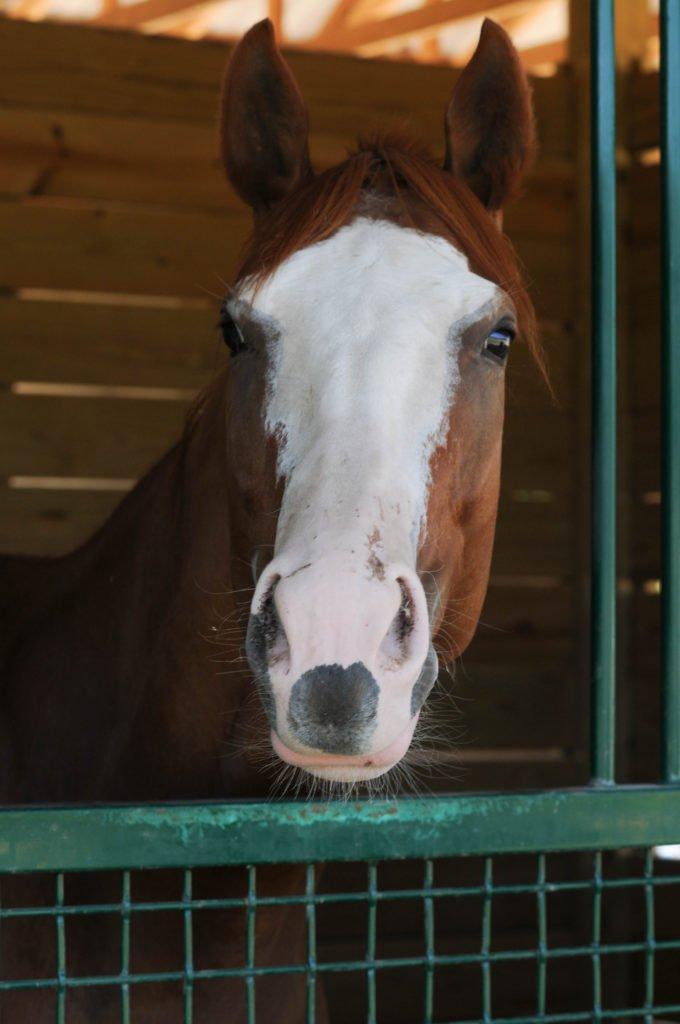 '4 Legged Sunblock' Protects Show Horses from Sunburn